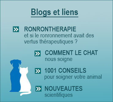 infosveterinairestoulouse